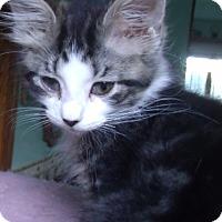 Adopt A Pet :: TACO - Acme, PA