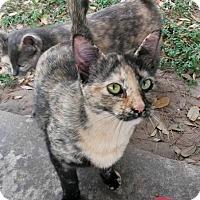 Adopt A Pet :: Hazel - Houston, TX