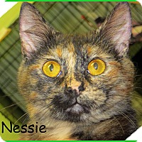 Adopt A Pet :: Nessie - Warren, PA