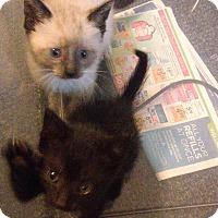 Adopt A Pet :: Siblings Lookin4 2 - Bayside, NY