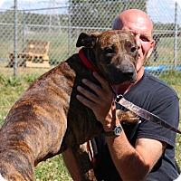 Adopt A Pet :: Lonesome - Elyria, OH