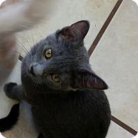 Adopt A Pet :: Nuka - Chippewa Falls, WI