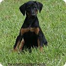 Adopt A Pet :: Davidson