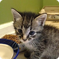 Adopt A Pet :: Mellow - Asheboro, NC