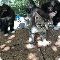 Adopt A Pet :: Bruce - Panama City, FL