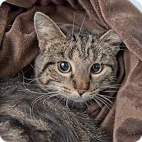 Adopt A Pet :: Wilson - Wilmington, DE