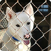 Adopt A Pet :: Togo - Shreveport, LA