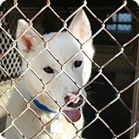 Adopt A Pet :: Togo - Shreveport, LA