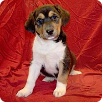 Adopt A Pet :: 16-d10-041 Ansel - Fayetteville, TN
