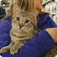 Adopt A Pet :: Jimmy - Rochester, MN