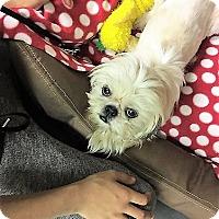 Adopt A Pet :: Suzie - Tavares, FL