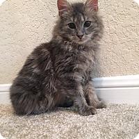 Adopt A Pet :: Beau - San Antonio, TX