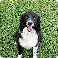 Adopt A Pet :: Frankie - Albany, NY