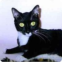 Adopt A Pet :: Dice - Medway, MA