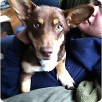 Adopt A Pet :: Ginger - Ooltewah, TN