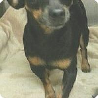 Adopt A Pet :: Aurora - Orlando, FL