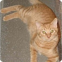Adopt A Pet :: HunnyBun - LUVbug - Cincinnati, OH