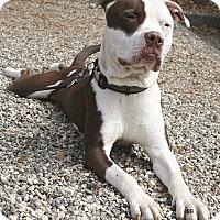 Adopt A Pet :: Jasper - Santa Barbara, CA