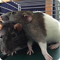 Adopt A Pet :: TEENY and TINY - Philadelphia, PA