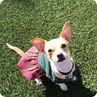 Adopt A Pet :: Tiki - Las Vegas, NV