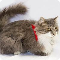 Adopt A Pet :: Sylvester - Schererville, IN