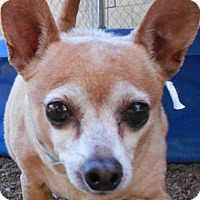 Adopt A Pet :: Tipper - Glendale, AZ