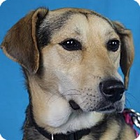 Adopt A Pet :: Cherish - Minneapolis, MN