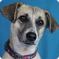 Adopt A Pet :: Leoni - Minneapolis, MN