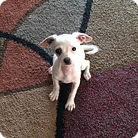Adopt A Pet :: Cooper - Tustin, CA
