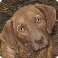Adopt A Pet :: Romeo - Staunton, VA
