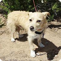 Adopt A Pet :: Darling LITTLE Ottie - Albuquerque, NM
