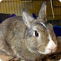 Adopt A Pet :: Lucas - Woburn, MA