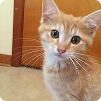 Adopt A Pet :: Tigger - Greensburg, PA