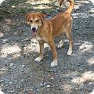 Adopt A Pet :: Taya