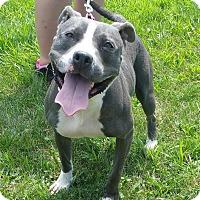 Adopt A Pet :: Bell - Lisbon, OH