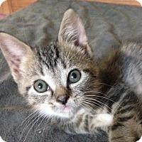 Adopt A Pet :: Scrat - Trevose, PA