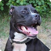 Adopt A Pet :: Jackson - Framingham, MA