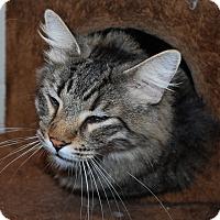 Adopt A Pet :: Smokey - Council Bluffs, IA