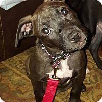 Adopt A Pet :: Marie - Charlotte, NC
