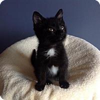Adopt A Pet :: VIOLET - Verona, WI