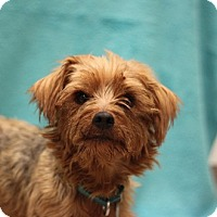 Adopt A Pet :: Paul Anka - Naperville, IL