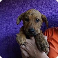 Adopt A Pet :: Derby - Oviedo, FL