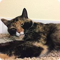 Adopt A Pet :: Coco - Gunnison, CO