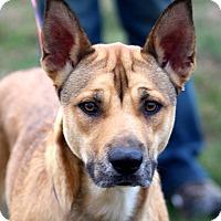 Adopt A Pet :: Heidi~adopted! - Glastonbury, CT