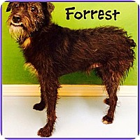 Adopt A Pet :: Forrest - Los Angeles, CA