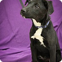 Adopt A Pet :: Bensen Burner - Broomfield, CO