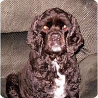 Adopt A Pet :: Zoe - Tacoma, WA