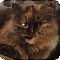 Adopt A Pet :: Esperanza - Davis, CA