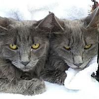 Adopt A Pet :: Jamie and CC - Chandler, AZ
