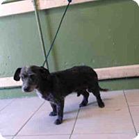 Adopt A Pet :: Brandon - Lomita, CA